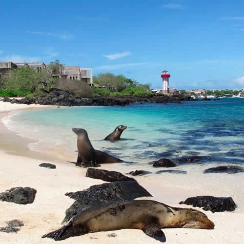 Galápagos Encantado